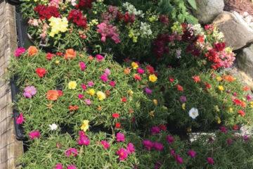 SunnySide Garden and Gifts Hard Goods