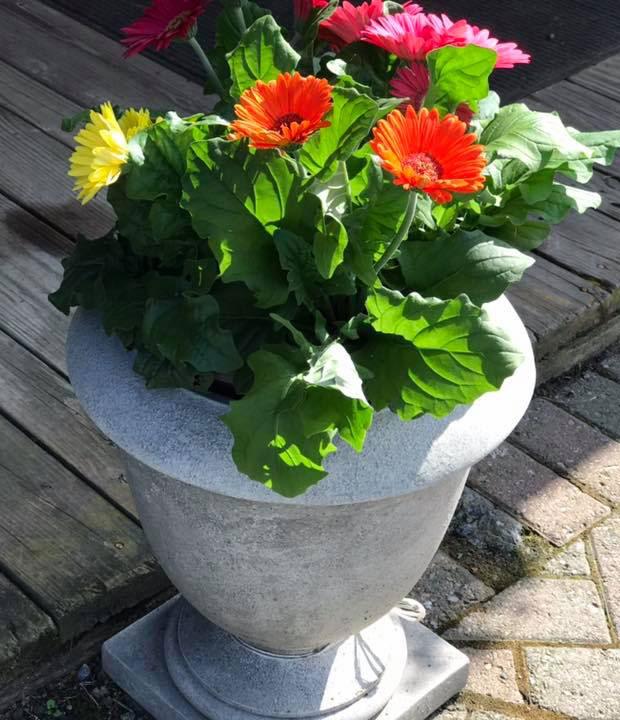 SunnySide Garden Potting Service