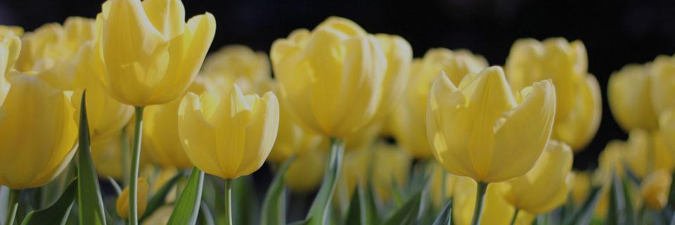 SunnySide Garden Floral Design